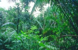 Sarawak Nature